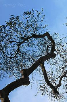 Clayton Bruster - Termite View