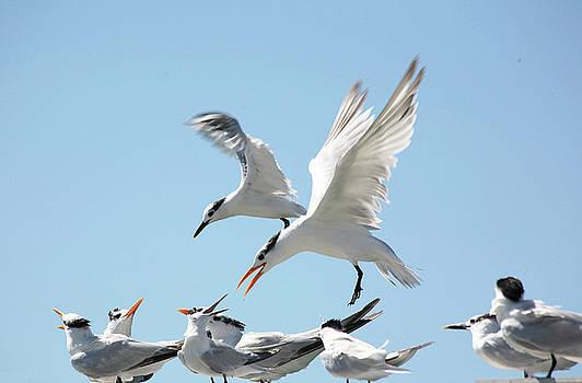 Tern About is Fair Play by Carol Kinkead