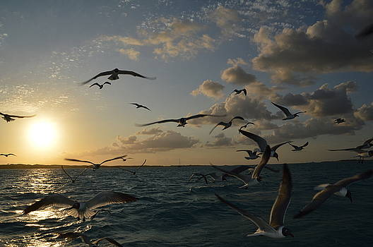 Terns in the Sunset by Erin Clausen
