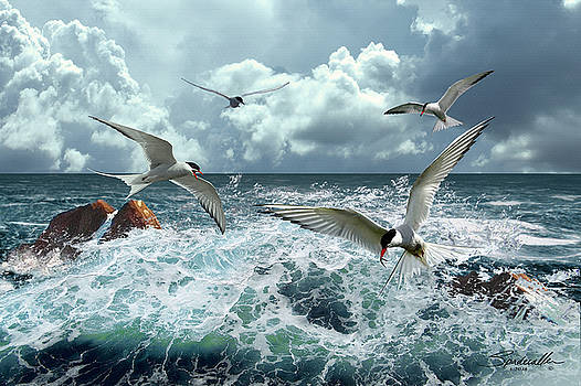 Terns In The Surf by M Spadecaller