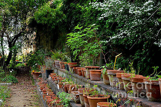 Terracotta Pots in the Botanical Gardens of Pisa Italy by Tanya Searcy