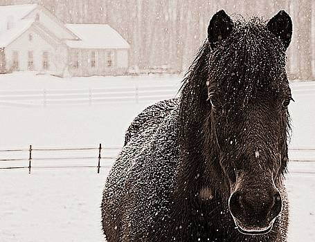 Black and white Horse by Marysue Ryan