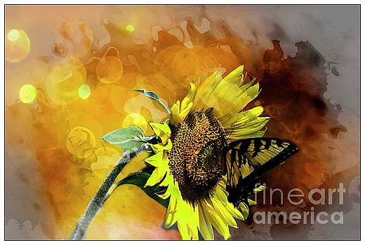Tetured sunflower by Geraldine DeBoer