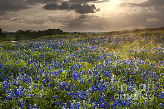 Texas bluebonnets at Sunrise by Keith Kapple