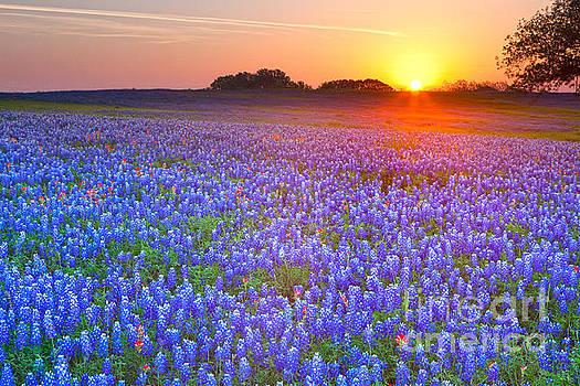 Texas bluebonnets by Keith Kapple