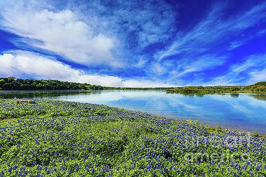 Texas Bluebonnets by Raul Rodriguez