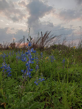 Texas Coastal Prairie Wildflower Sunset by Joshua House