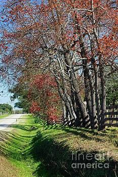 Texas Fall by Lori Mellen-Pagliaro