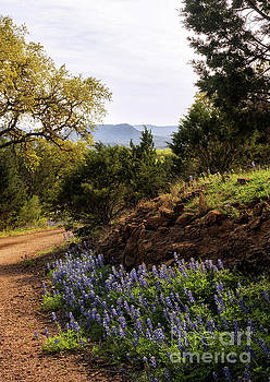 Texas Hill Country by Cathy Alba
