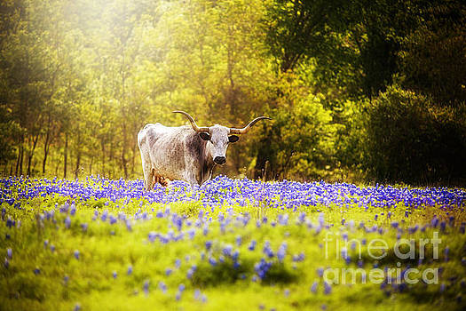 Texas Longhorn in Dreamy Light by Katya Horner