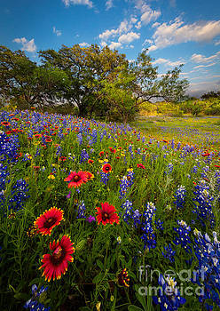 Texas Paradise by Inge Johnsson