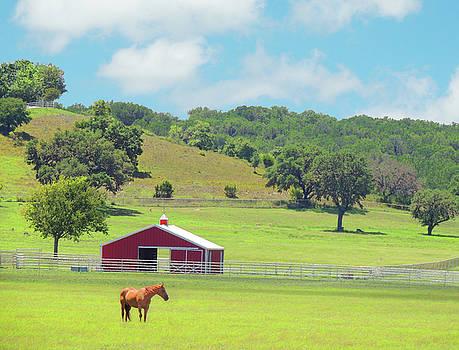 Texas Pastures by Krin Van Tatenhove