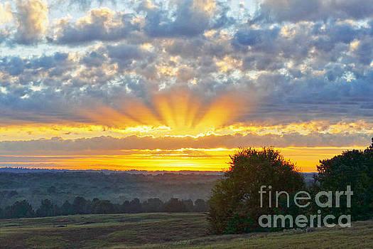 Texas Piney Woods Sunrise by Catherine Sherman