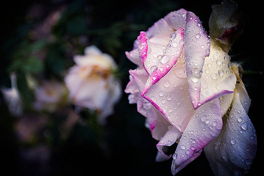 Texas Rain Drops by Amber Dopita