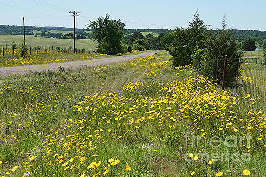 Texas Roadside Wildflowers by Catherine Sherman