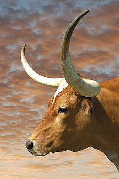 Texas Steer by Robert Anschutz