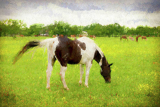 Texas Summer Grazer by Ray Keeling