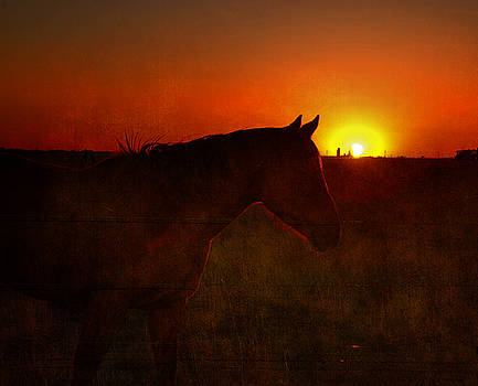 Susanne Van Hulst - Texas Sunset