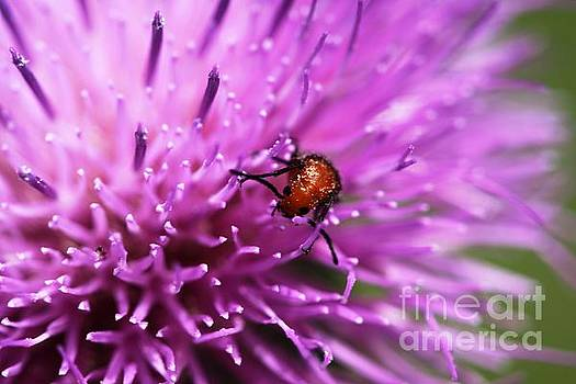Texas Thistle Bug 2 by Patricia Alexander
