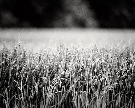 Lisa Russo - Texas Wheat Field in Black and White