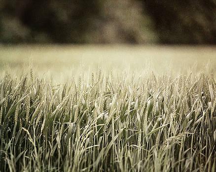 Lisa Russo - Texas Wheat Field Landscape