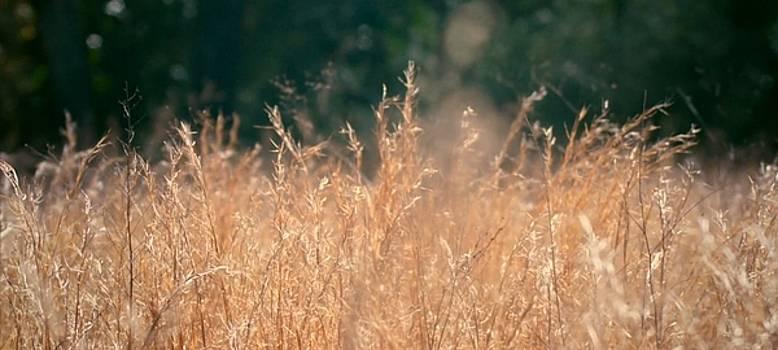 Texas Wheat Fields by Mozelle Beigel Martin