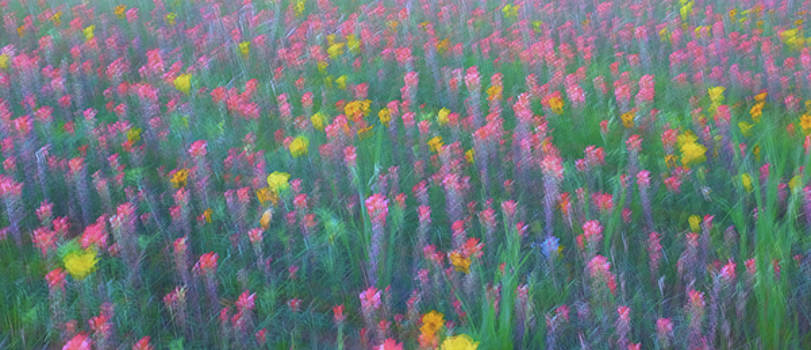 Texas Wildflowers Abstract by Robert Bellomy