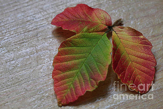 Texture Leaf by Tracy Hall