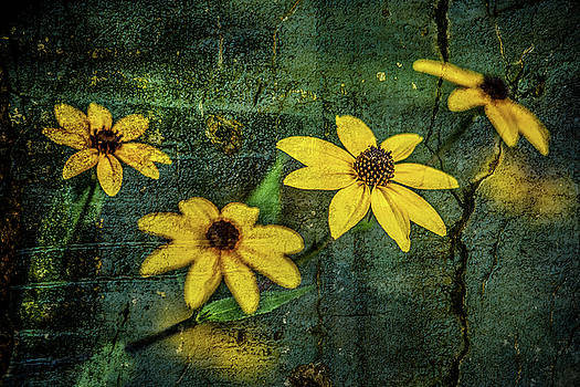 Textured Flower 1 by Michael Arend