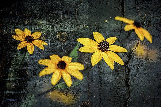Textured Flower 2 by Michael Arend