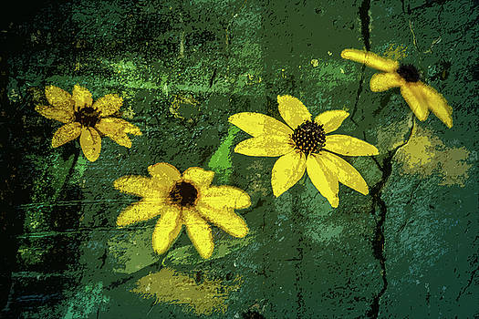 Textured Flower 3 by Michael Arend