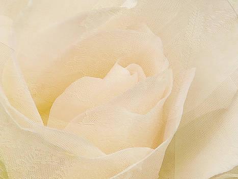 Textured Pastel Rose by Blair Wainman