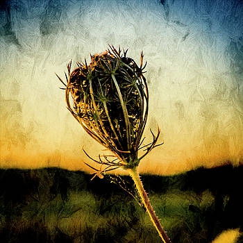 Textured Seedhead. by Paul Cullen