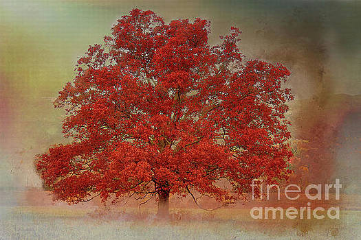 Textured Tree by Geraldine DeBoer