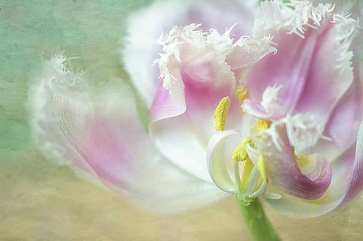 Textured Tulip by Nancy Kirkpatrick
