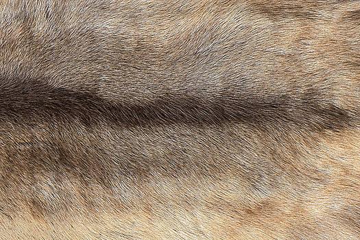 Eduardo Huelin - Textures of wolf Fur background