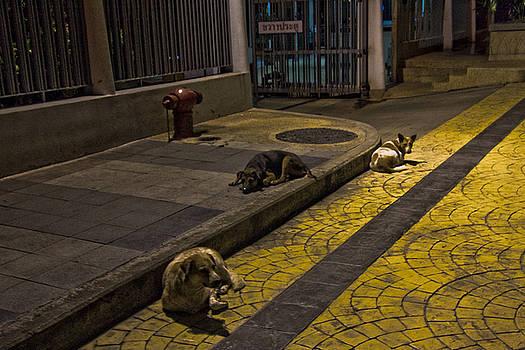 Thailand Strays by Leo Bello
