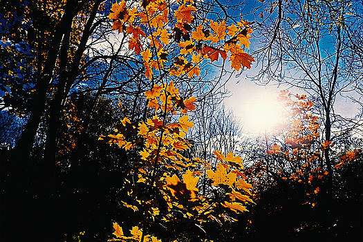 That day of autumn where the sun was sorrowing by Asbed Iskedjian