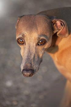 That Look Doggy by Matjaz Preseren