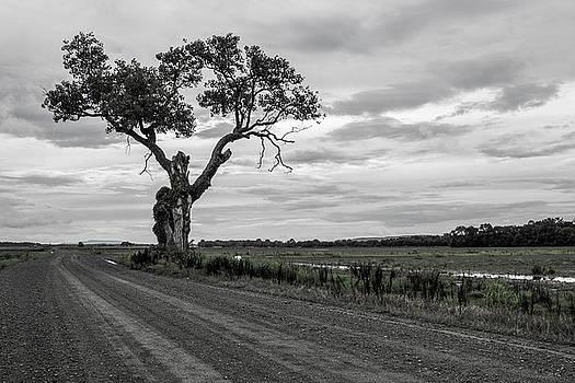 That One Tree by Tammy Chesney
