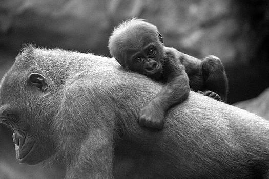 That's My Mommy by Jake Danishevsky
