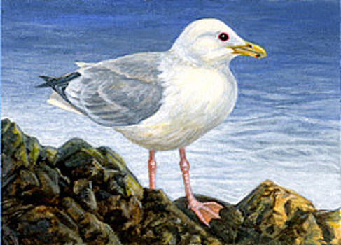 Thayer's Gull ACEO by Shari Erickson