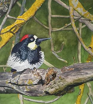 The Acorn Woodpecker by Sharon Gerber