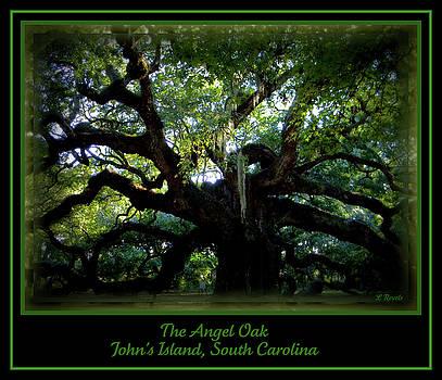 The Angel Oak by Leslie Revels