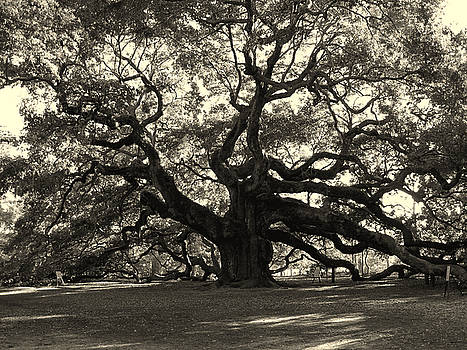 Susanne Van Hulst - The Angel Oak