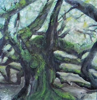 The Angel Oak Tree by Jacqueline Whitcomb