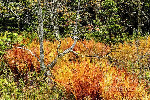 The Art of Autumn by Thomas R Fletcher