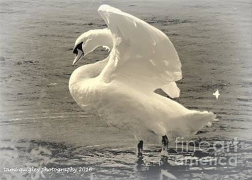 Tami Quigley - The Art Of The Swan