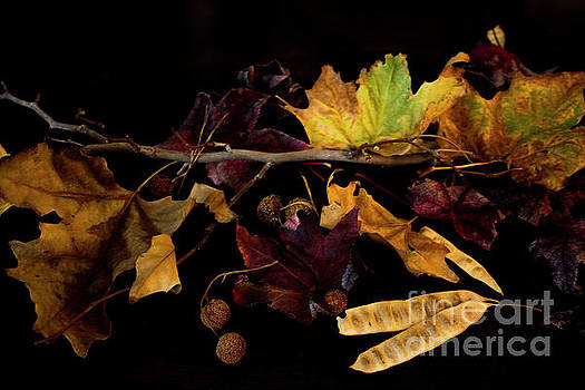 The Autumn Branch by Ivete Basso Photography