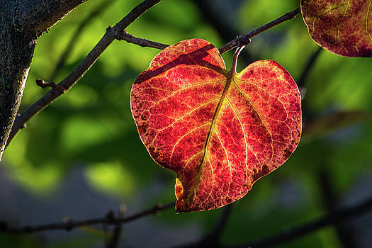 The Autumn Heart by Bill Pevlor